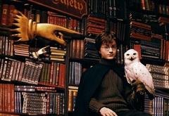 Промо постер с Гарри Поттером и Хедвиг