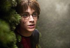 Гарри у ели