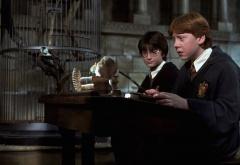 Рон со сломаной палочкой, Короста и Гарри на уроке