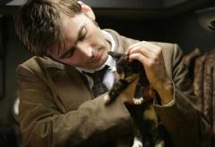 доктор и кот
